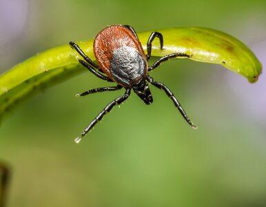 """<a href=""""https://zdrowie.wprost.pl/koronawirus/10377150/czy-komary-lub-kleszcze-moga-rozprzestrzeniac-koronawirusa.html?utm_source=zdrowie.wprost.pl&utm_medium=feed&utm_campaign=rss"""">Czy komary lub kleszcze mogą rozprzestrzeniać koronawirusa?</a> thumbnail  Ksiądz z Lublina nagle przerwał mszę. &#8220;Wyszedł na zakrystię, a gdy wrócił, to powiedział nam, że ma koronawirusa&#8221; 8f04f17cc8d6ca6ceeccb4f84617"""